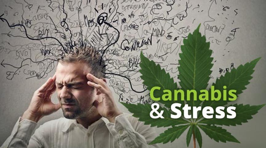 Marijuana and Anxiety Attacks – What is the Link?