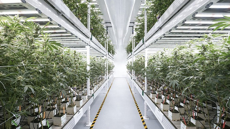 The Growing Recognition of Indoor Marijuana Cultivation